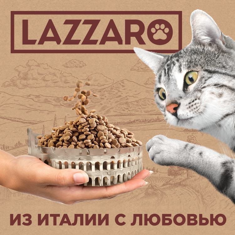 Дизайн упаковки, Дизайн буклета, Style You, LAZZARO